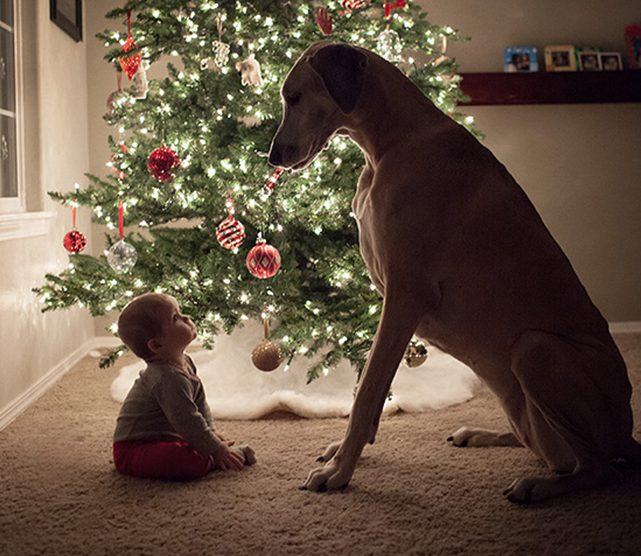 Keep Cat Away From Christmas Tree: Baby, Toddler And Pet Proofing Your Christmas Tree