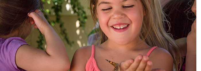 A child in our Pre-Kindergarten class finds a butterfly during our daycare program.