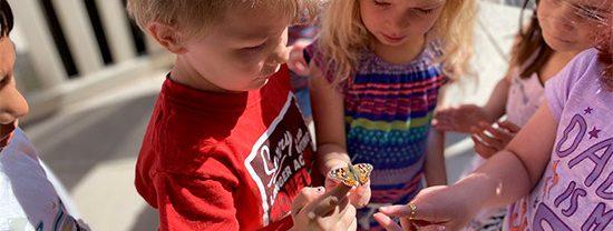 boy releasing butterfly at preschool